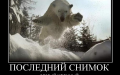 Летающий белый медведь