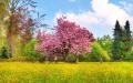 Фотообои, фотостены: цветущее дерево