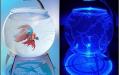 Самые оригинальные аквариумы. Аквариум-глобус