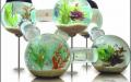 Самые оригинальные аквариумы. Аквариум-лабиринт