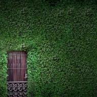 Дверь в зеленом ограждении
