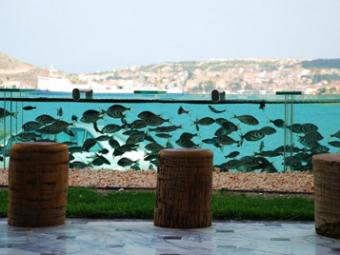 Аквариум с рыбами вместо забора